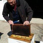 George Brining Checking Honey Supers