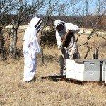 Gold Standard Honey Hive Maintenance